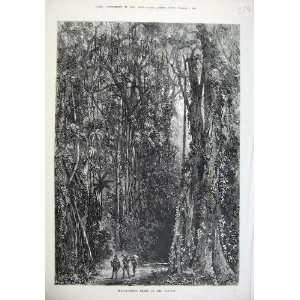 1875 Indiarubber Trees Forest People Antique Fine Art