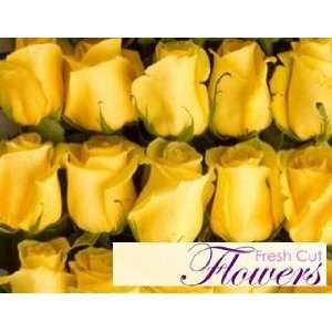 150 Yellow Long stem Roses From South America (Wholesale)  26 inch