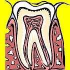 Dental Assistant Courses Dentist Training Manuals