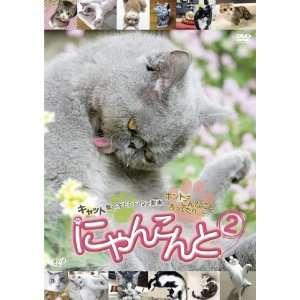 Japanese TV   Nyanconte 2 Cat Odoroku Omoshiro Neko Douga