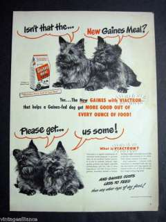 1948 Vintage GAINES MEAL Terrier Dog Food 40s Print Ad