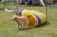 Heavy Duty 15 Dog Agility Competition Tunnel Free Ship