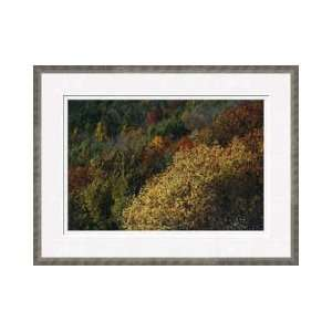 Wild Cherry Tree Leaves Blue Ridge Mountains Framed Giclee