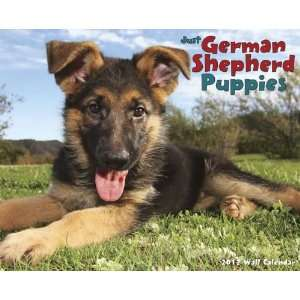 German Shepherd Puppies 2012 Wall Calendar Office
