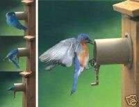 AUDUBON BIRD GUARDIAN BLUE BIRD HOUSE PREDITOR GUARD