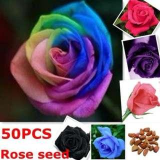 50X Seeds Rose Graines Rouge Bleu Violet Noir Coloré Pétale Plantes