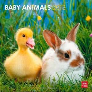 Baby Animals 2013 Square 12X12 Wall Calendar
