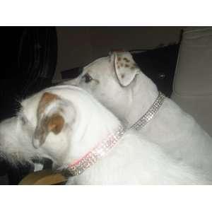 Crystal Dog Collar fits neck size 10 14 inches Rhinestone Dog Collar