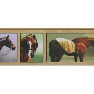 Horse Frames Wallpaper Border in York Border Gallery